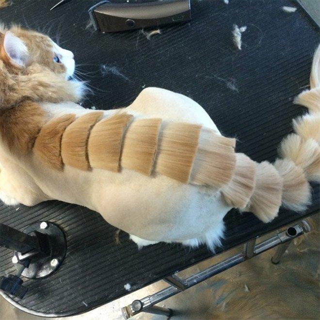 Коты и стрижка под динозавра