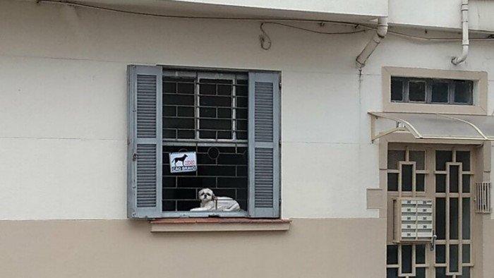 Кто скрывается за табличкой Осторожно, злая собака
