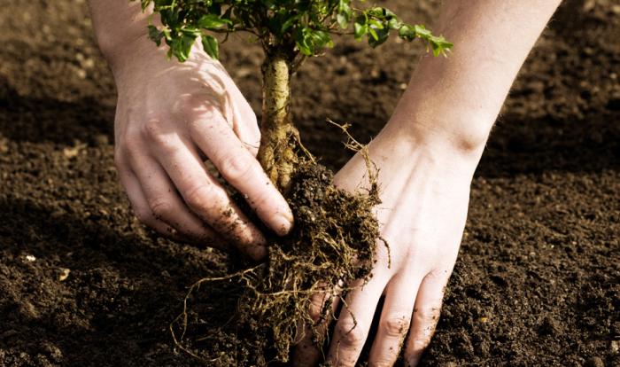 Садовые работы весной, которые можно не делать