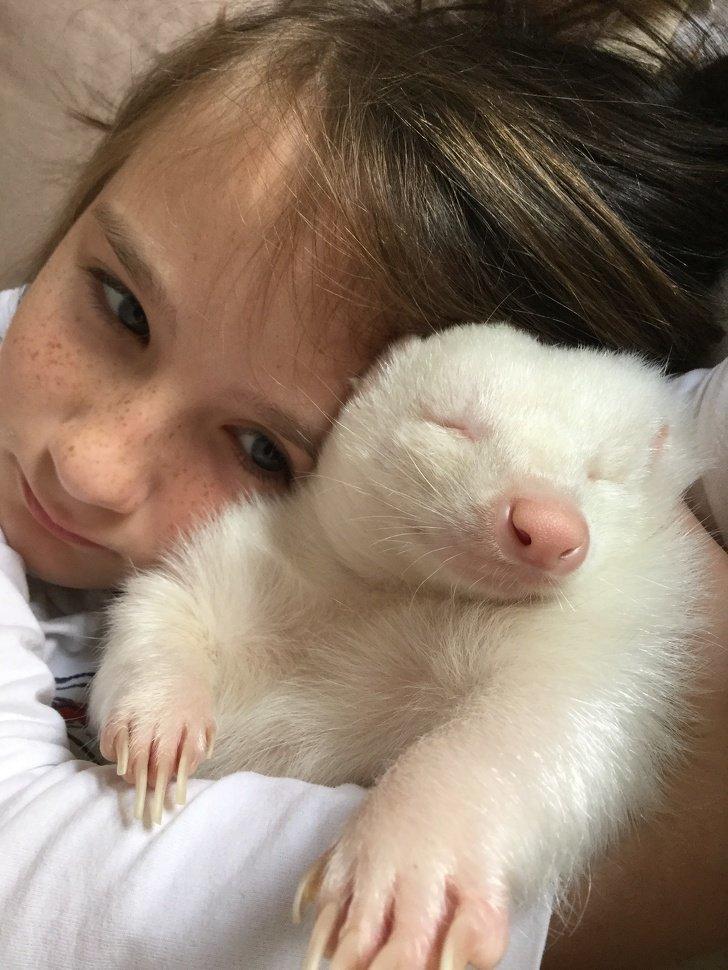 Удивительно выглядящие животные-альбиносы