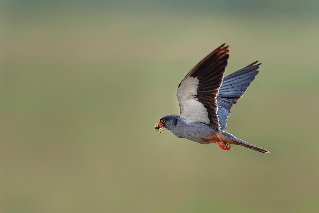 Красота птиц Индии в объективе Тхирумурти Ра