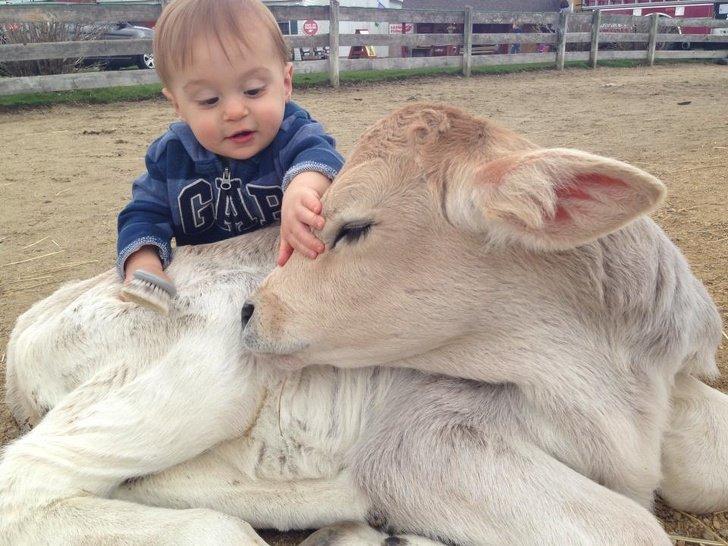 Милые и очаровательные детёныши разных животных