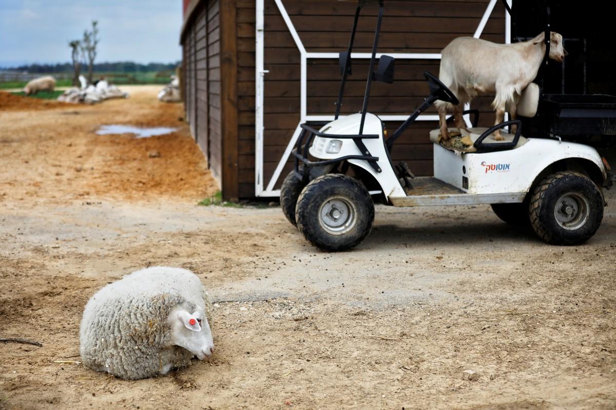 Ферма Freedom Farm для животных с ограниченными возможностями в Израиле
