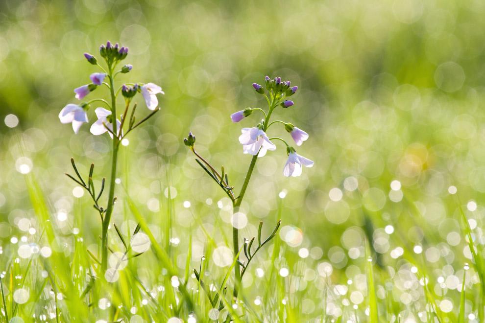 Конкурс садово-парковой фотографии Великобритании 2019