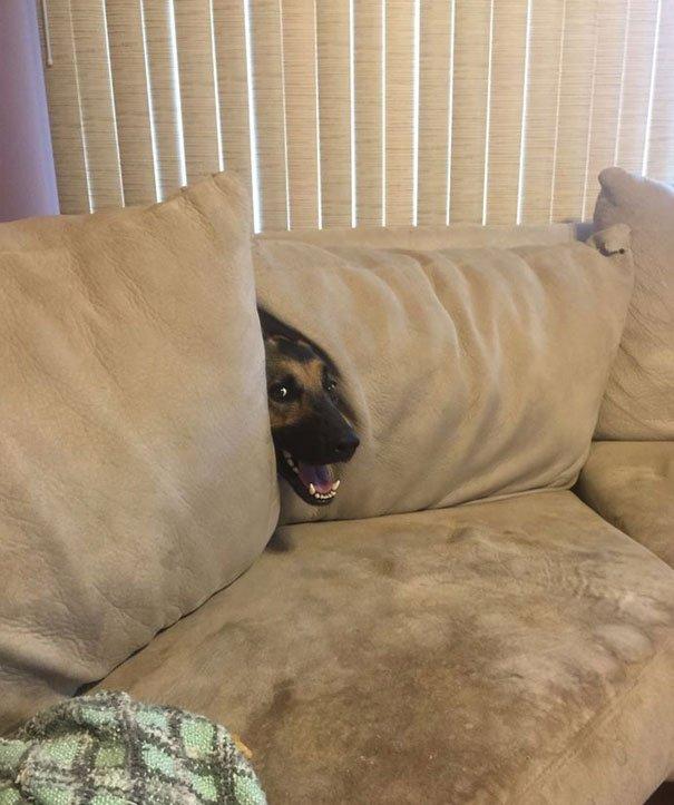 Смешные собаки в странных ситуациях