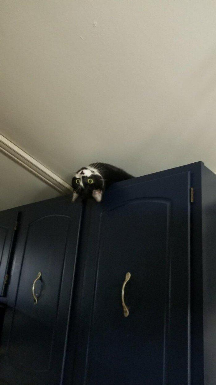 Коты повели себя очень странно, но смешно