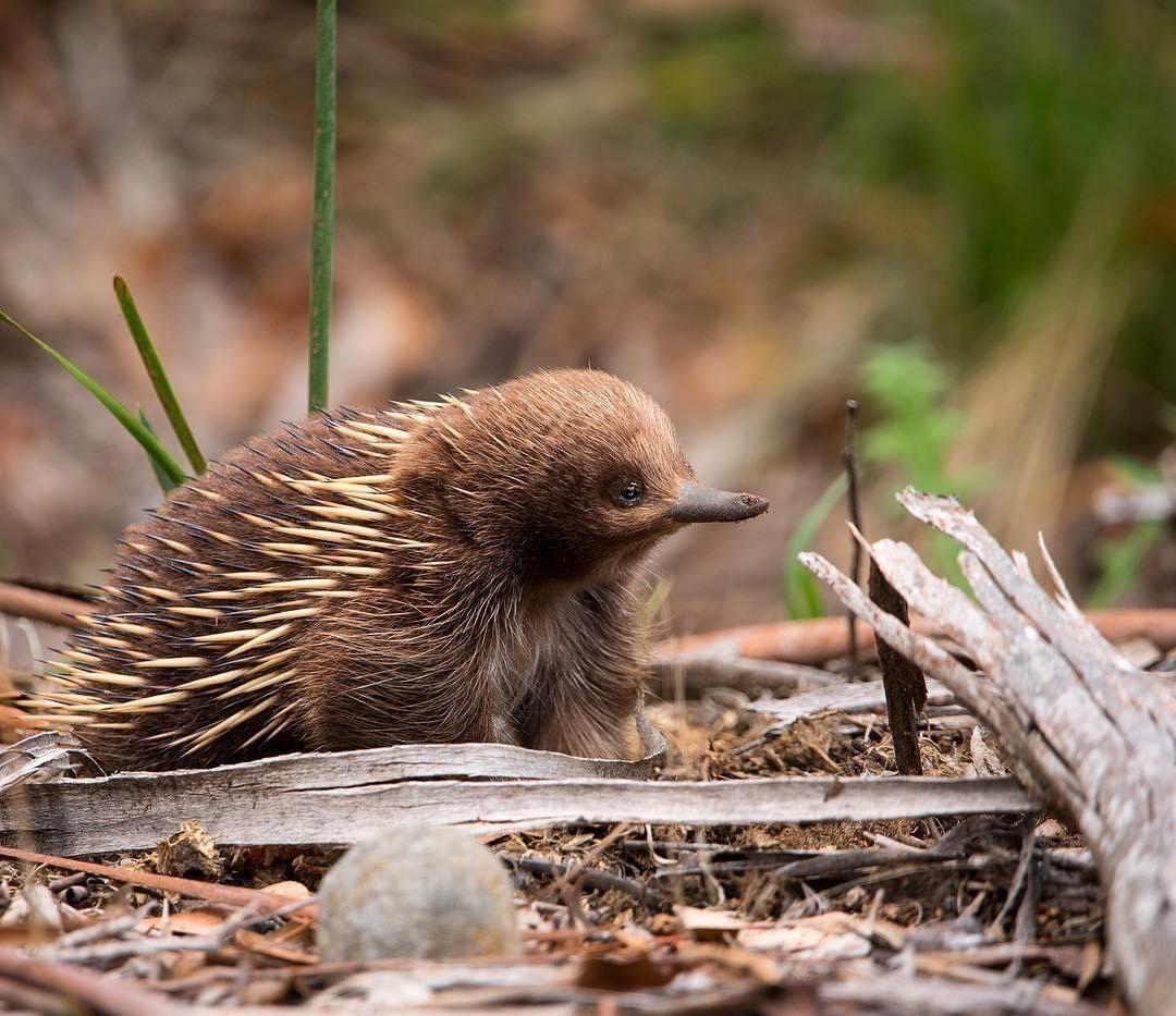 Прикольные фото из Австралии