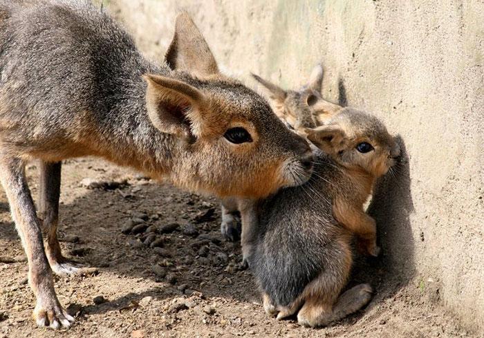 Детеныши животных редких видов