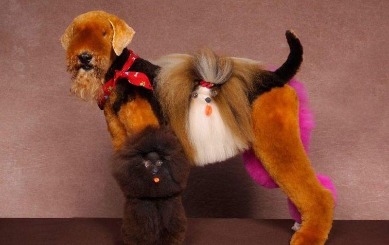 Форменное безумие на соревновании собачьих парикмахеров