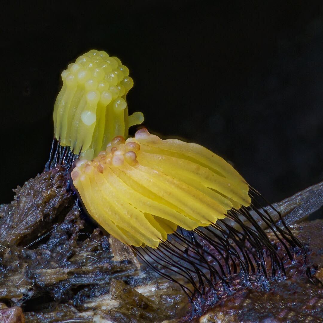 Удивительные грибы Северной Калифорнии