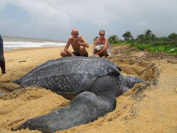 20 животных невероятных размеров