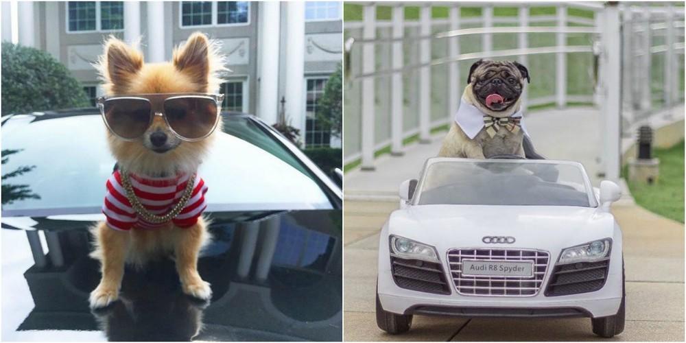 Rich Dogs Of Instagram: о жизни состоятельных собак