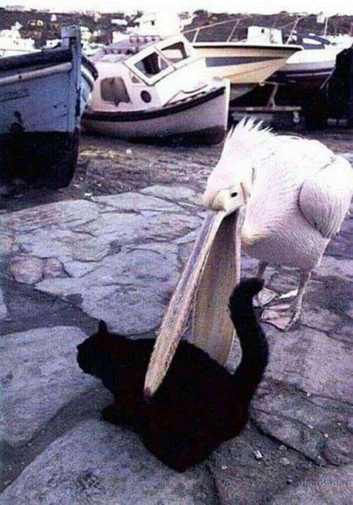Смешные коты, которые вляпались в нелепые ситуации