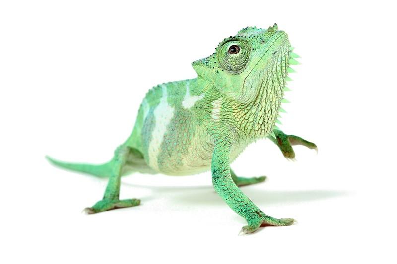Очаровательные рептилии на снимках работника зоопарка