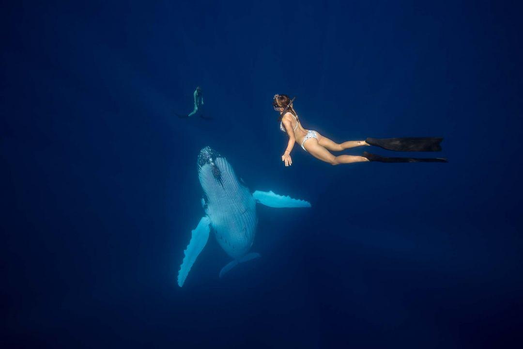 Удивительные подводные фотографии от Скотта Уилсона