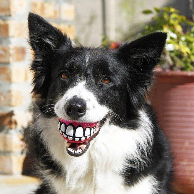 Забавный мячик с зубами для каждой собаки