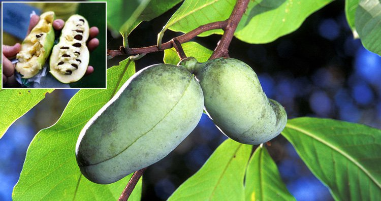 10 малоизвестных фруктов