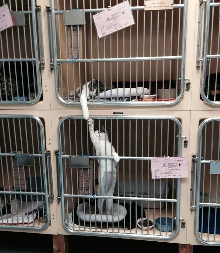 Душевные снимки из приютов для животных