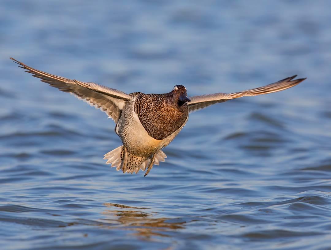 Красота птиц Италии на снимках Лоренцо Магнольфи