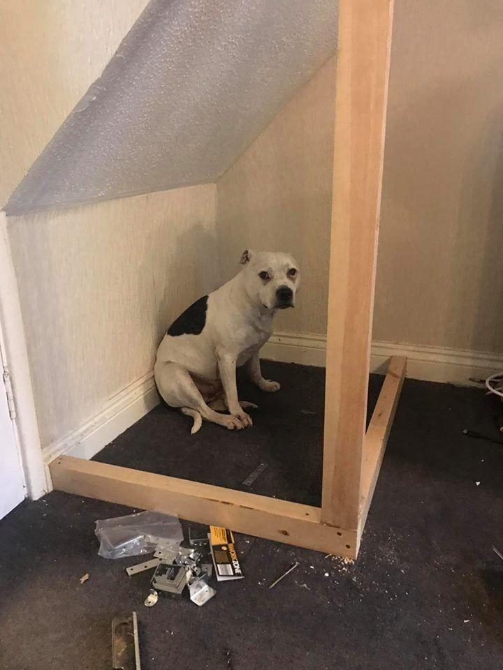 Пёсель из приюта не мог привыкнуть к новому дому, и хозяин смастерил ему личные апартаменты