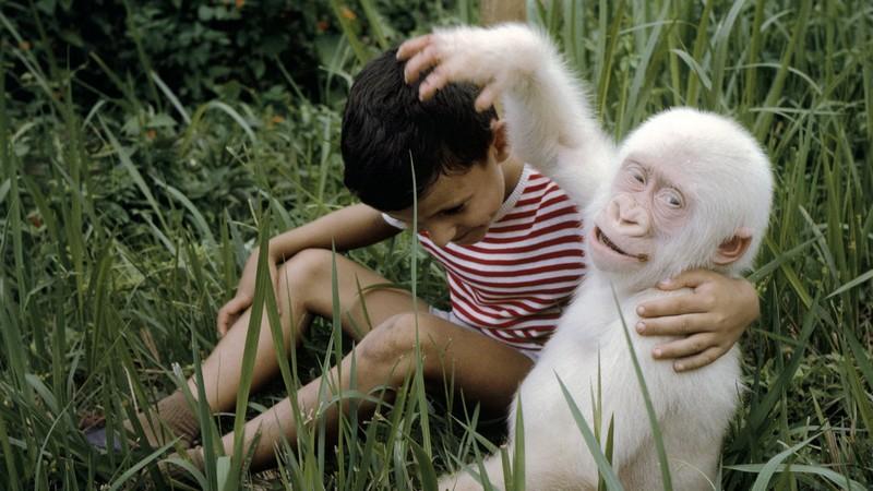 15 научных фактов, подтверждающих различия между людьми и видами животных