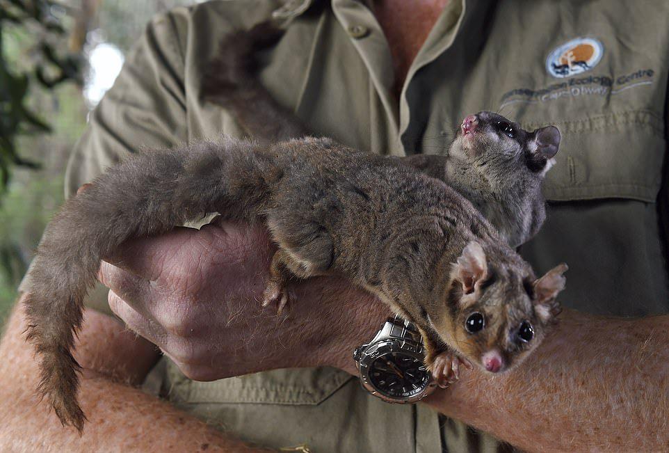 Австралиец строит ферму для спасения редких животных