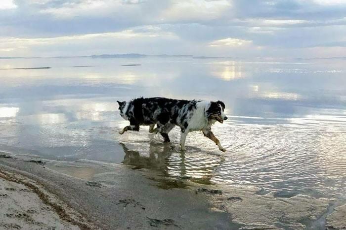 Неудавшиеся панорамные снимки с животными