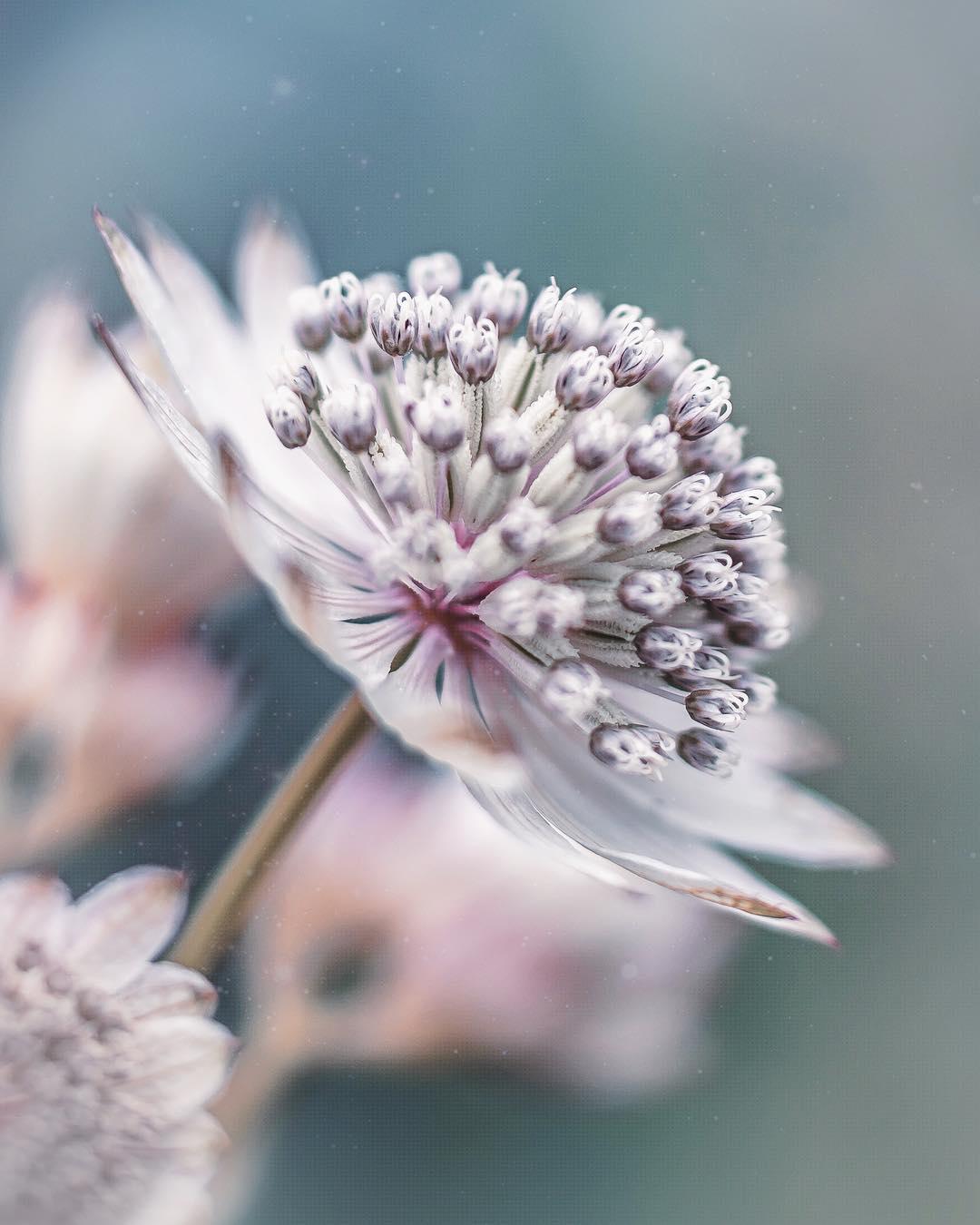 Красота цветов на фотографиях Хико Такахаси