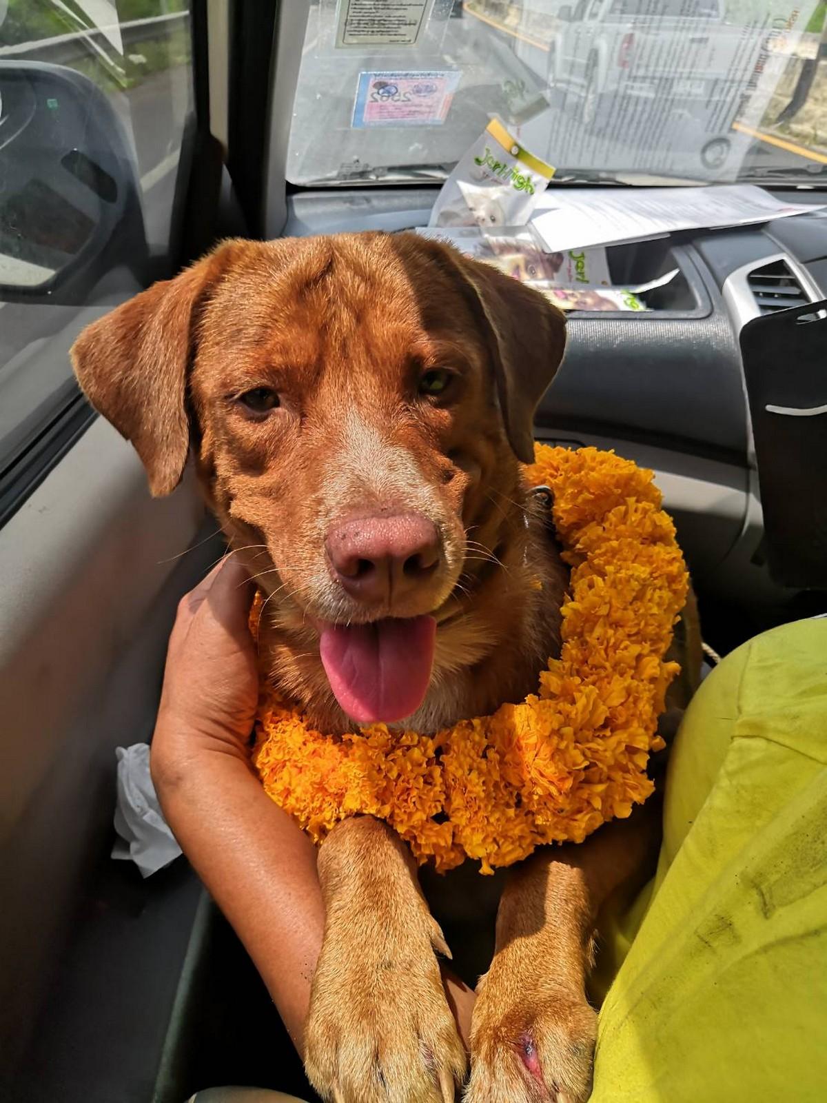 Рабочие нефтяной вышки спасли собаку, подплывшую к установке в 217 км от берега