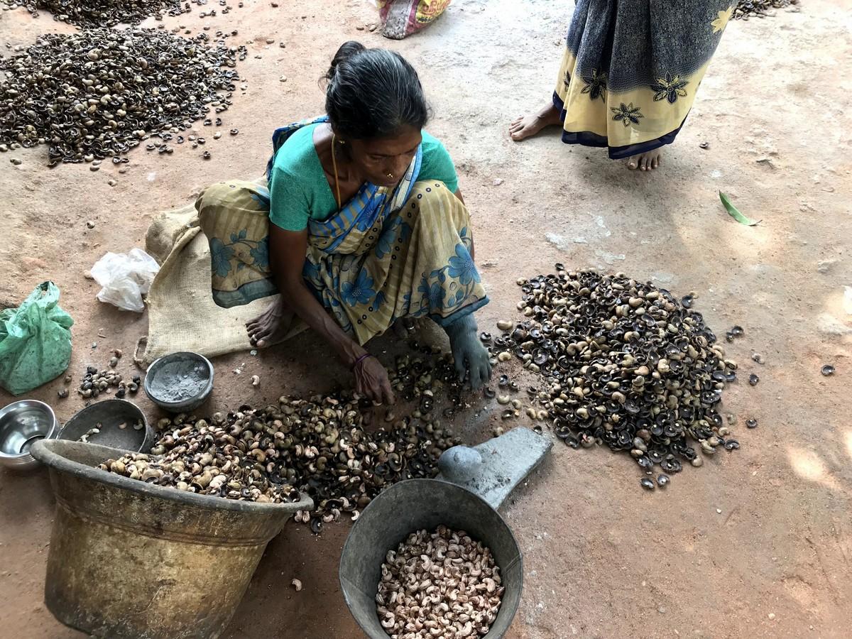 Сожженные руки женщин, которые занимаются обработкой кешью