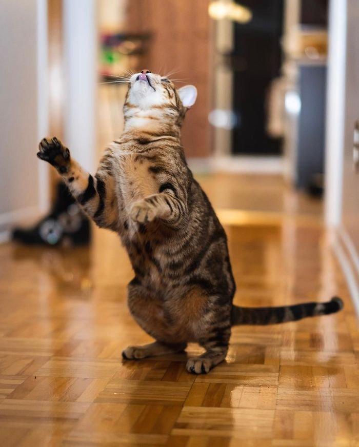 Танцующие коты заряжают позитивом
