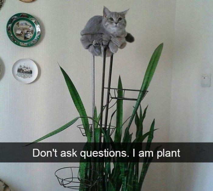 20 снимков котов, на которых нашло легкое безумие