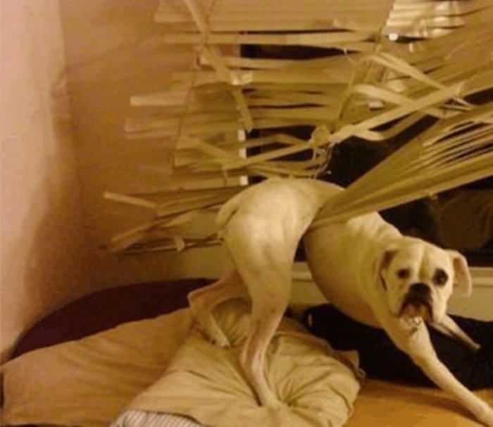 Что же делают собаки, когда нас нет дома