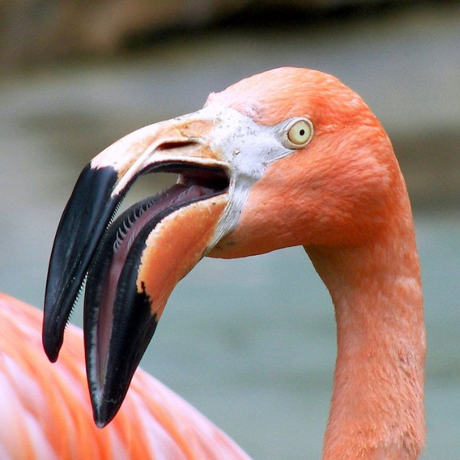 Птичьи клювы вблизи могут и напугать