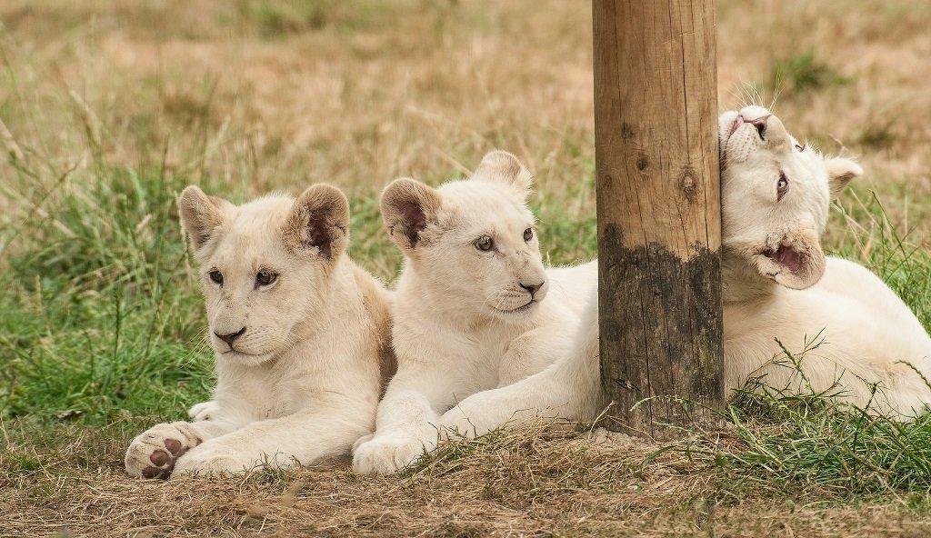 Самые дорогостоящие животные в мире