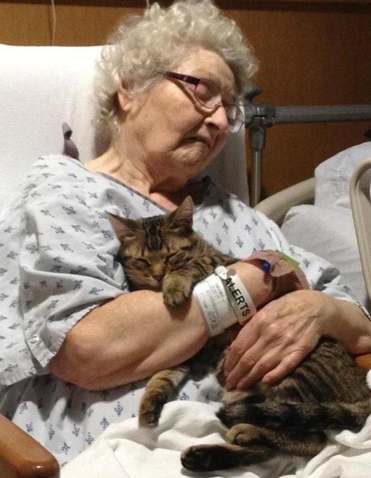 20 трогательных снимков о любви домашних животных