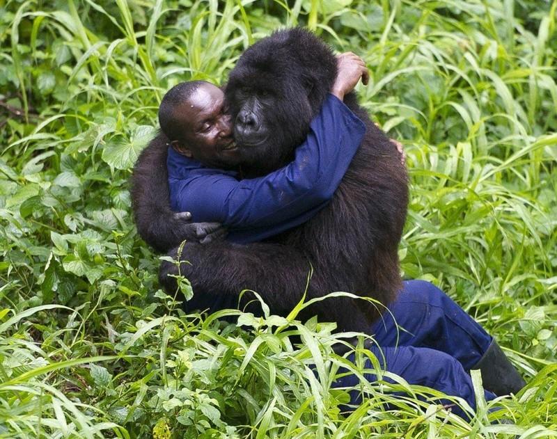 Снимки рейнджеров парка с гориллами стали вирусными