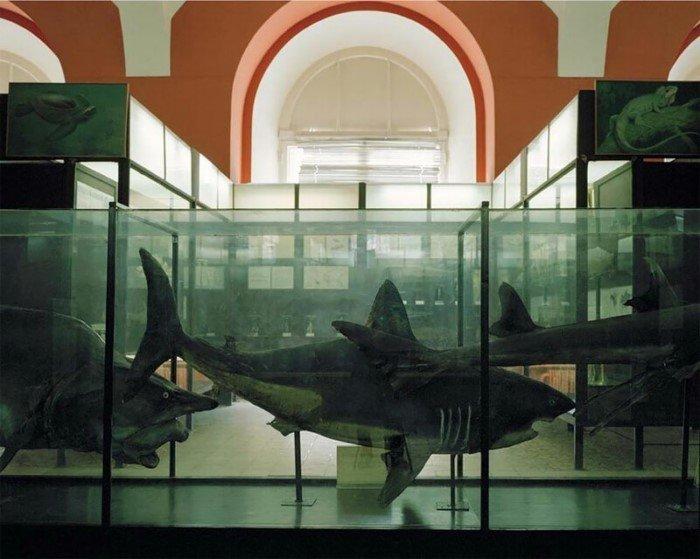 Потерянные во времени - фотографии из московских музеев