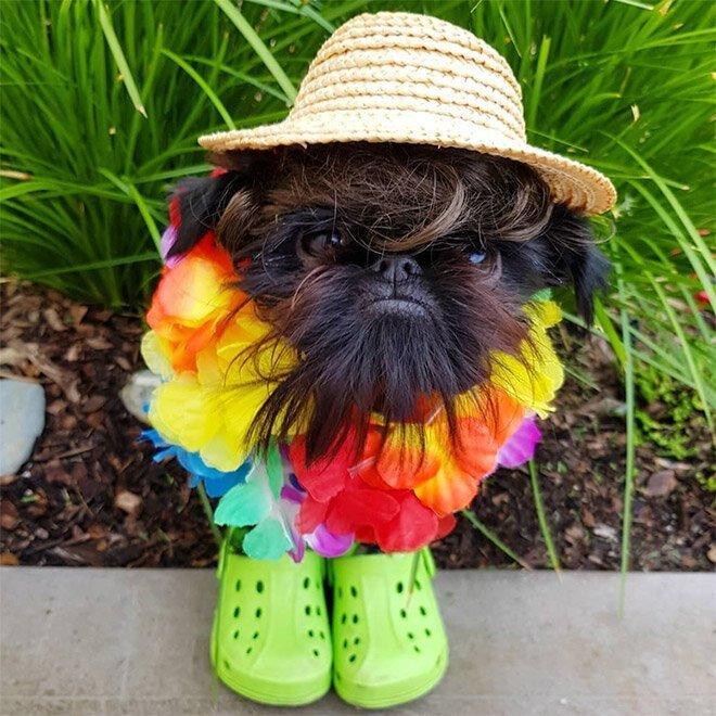 У этой собачки 265 тысяч подписчиков в Instagram