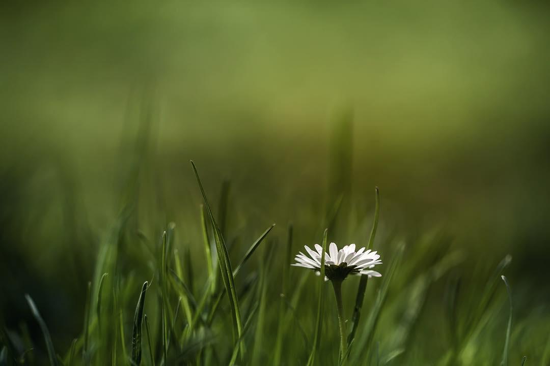 Красота цветов на снимках Сильвии Кобеловой