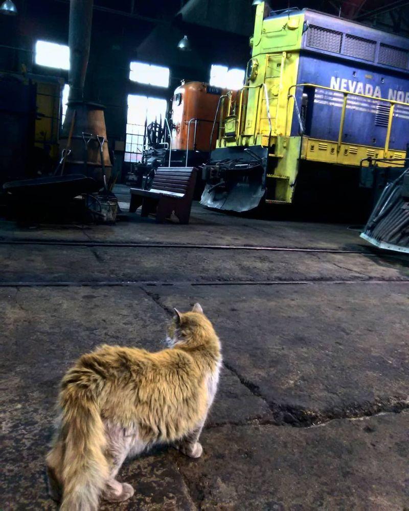Кошка по кличке Грязь - талисман музея железной дороги