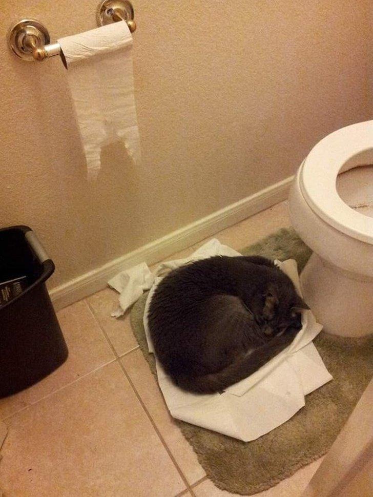 Коты тоже попадают в странные ситуации
