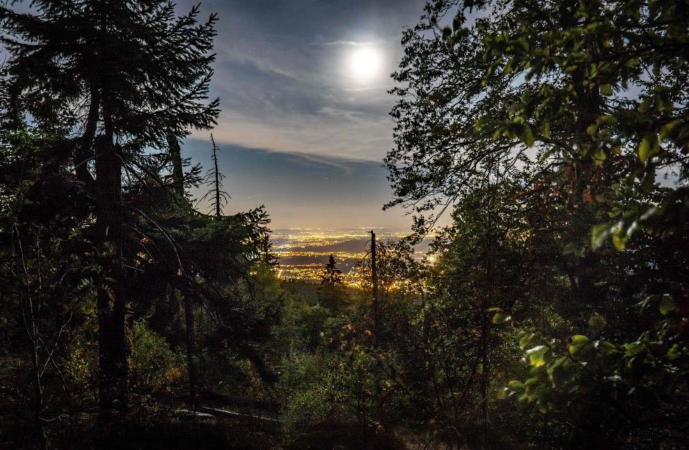 Красивые картинки леса на Земле