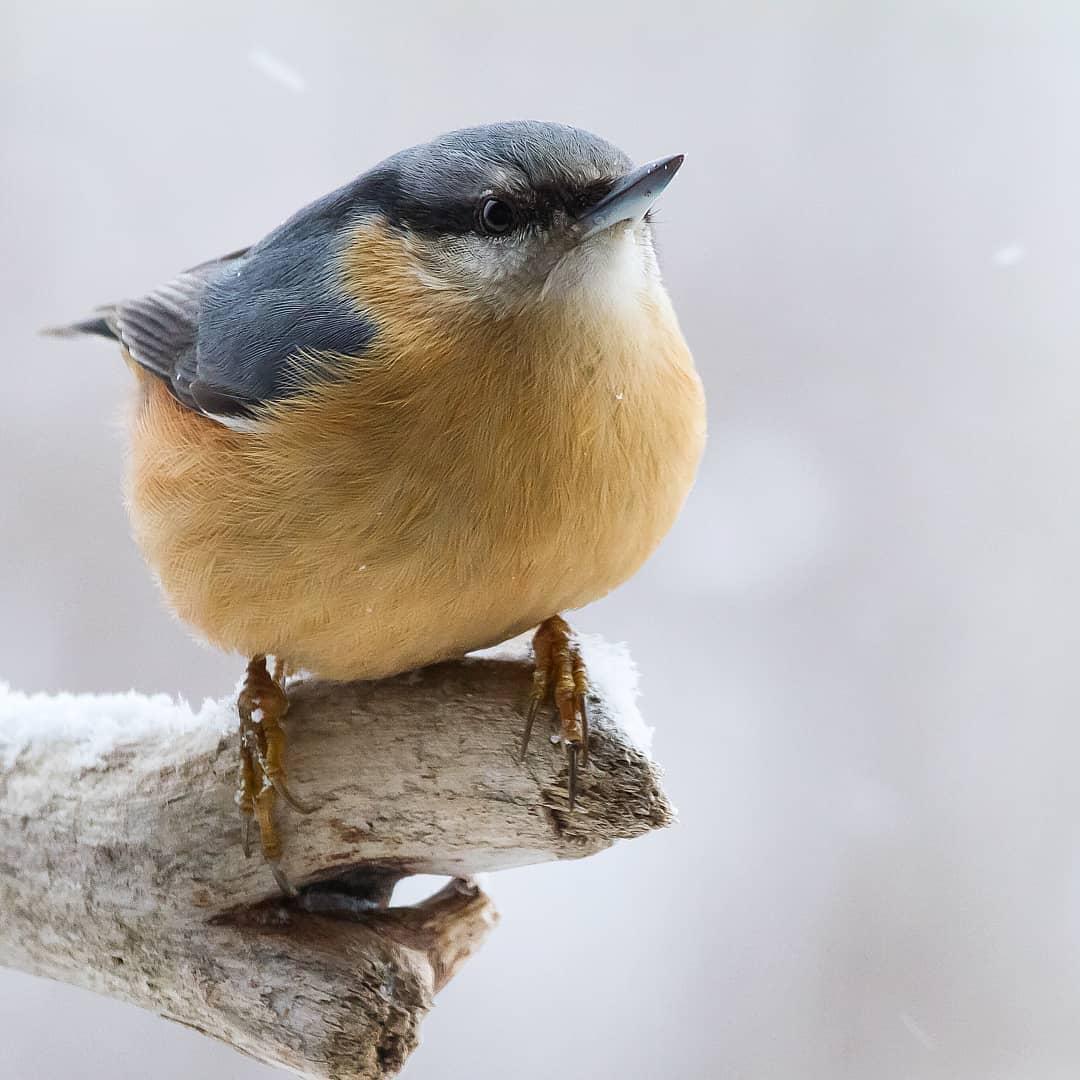 Яркие птицы на снимках Kotics Zsolt