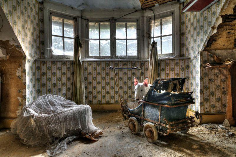 Бультерьер путешествует с хозяйкой по заброшенным зданиям