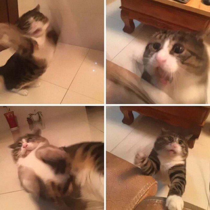 Этот эмоциональный кот просто король драмы