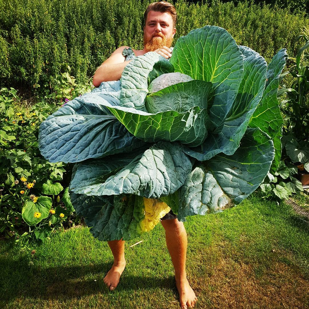 9 овощей просто нереальных размеров