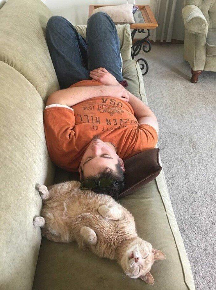Котики, которые заснули в самых странных позах