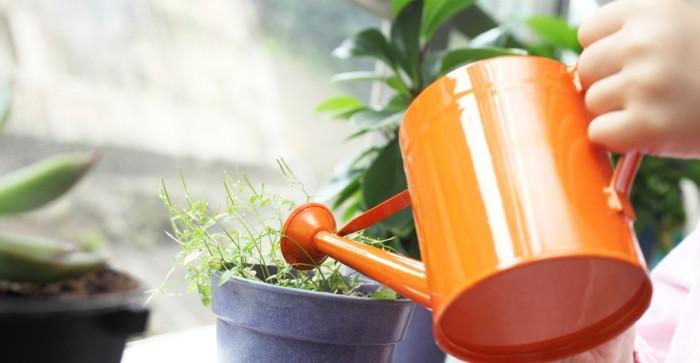 Способы борьбы с плесенью в вашем доме