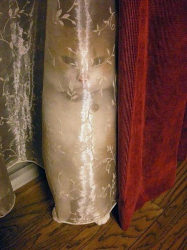 Эти коты в совершенстве освоили древнее искусство ниндзюцу